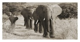 Herd of African Elephants, Kenya Giclee Print by  Anonymous
