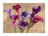 Multi-colored Callas Giclee Print by Jenny Thomlinson