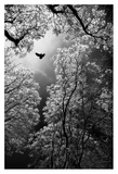 Flight Giclee Print by Goran Stamenkovic