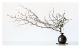 Vase And Branch Giclee Print by Prbimages