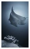 Sonata Giclee Print by Andrey Narchuk