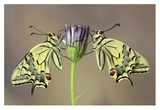 Symmetry Giclee Print by Jimmy Hoffman