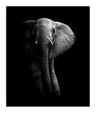 Elephant! Giclee Print by Wildphotoart