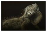 Iguana Profile Giclee Print by Aleksandar Milosavljevic