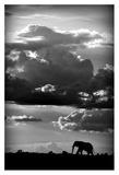 He Walks Under An African Sky Giclee Print by Wildphotoart