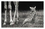 Well Protected Giclee Print by Andreas Feldtkeller