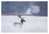 Fallow Deer In The Frozen Winter Landscape Giclee Print by Allan Wallberg