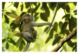 Monkey Tale Giclee Print by John Foreman