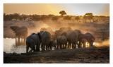 Elephant Huddle Giclee Print by Simon Van Ooijen