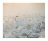 Song Of The Morning Light Giclee Print by Dmitry Dubikovskiy