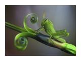 Saltamontes Giclee Print by Jimmy Hoffman