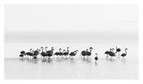 Flamingos Giclee Print by Joan Gil Raga