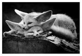 The Happy Couple Giclee Print by Inna Blar
