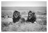Two Kings Giclee Print by Nicolas Merino