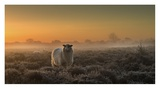 Sheep In The Mist Giclee Print by Rijko Ebens