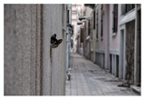 Dantel Street Cat Giclee Print by Ali Ayer