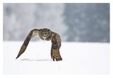 Eurasian Eagle-Owl Giclee Print by Milan Zygmunt