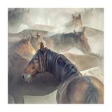 Tired Horses Giclee Print by Huseyin Ta?k?n