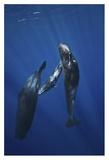 Sperm Whale Family Giclee Print by Barathieu Gabriel