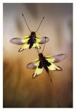 Owlflies Giclee Print by Jimmy Hoffman