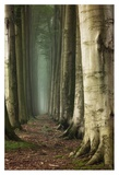 Path Of The Divine Giclee Print by Ellen Borggreve