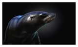 Seal Giclee Print by Pedro Jarque