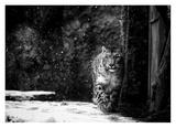 Dark Side Giclee Print by David Williams