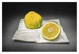 Citrus Giclee Print by Christophe Verot