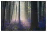 Velvet Light Giclee Print by Adrian Popan