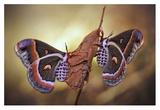 Robin Moths Giclee Print by Jimmy Hoffman