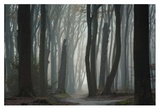 Follow Your Own Way Giclee Print by Ellen Borggreve