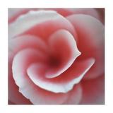 Begonia Giclée-tryk af Lotte Gronkjaer
