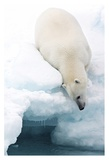 Arctic Composition Giclee Print by Marco Gaiotti