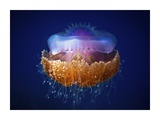 Fried Egg Jellyfish Giclee Print by Luckyguy
