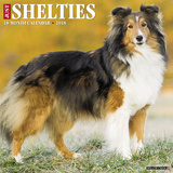 Just Shelties - 2018 Calendar Kalenders