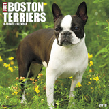 Just Boston Terriers - 2018 Calendar Calendars