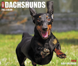Just Dachshunds  - 2018 Boxed Calendar Calendars