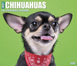 Just Chihuahuas  - 2018 Boxed Calendar Calendars