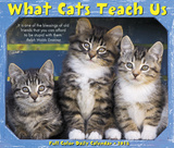 What Cats Teach Us - 2018 Boxed Calendar Calendars