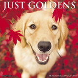 Just Goldens - 2018 Calendar Kalendere