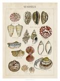 Seashell Sketch I Giclee Print by Naomi McCavitt