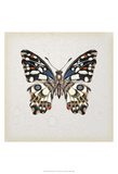 Butterfly Study II Poster by Melissa Wang