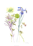 Watercolor Floral Study II Limited Edition by Melissa Wang