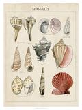 Seashell Sketch II Giclee Print by Naomi McCavitt