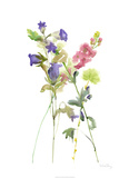 Watercolor Floral Study IV Limited Edition by Melissa Wang