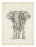 Elephant Sketch II Giclee Print by Ethan Harper