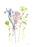Watercolor Floral Study III Limited Edition by Melissa Wang