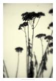Photography/Landscape 156 Affiches par Inc, DAG