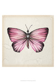 Butterfly Study IV Print by Melissa Wang