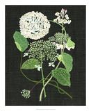 White Hydrangea Study I Giclee Print by Melissa Wang